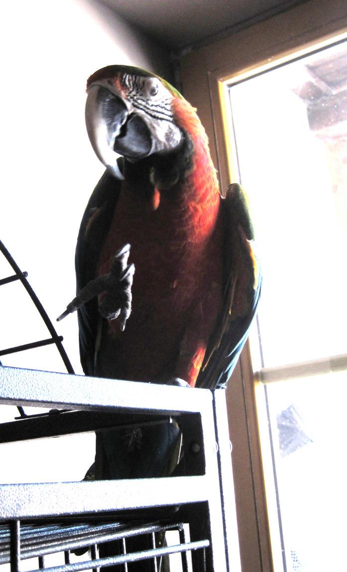Parrot 2 by jajafilm