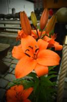 Beautiful flower by jajafilm