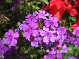 Purple flower by jajafilm