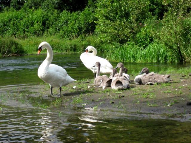Family by jajafilm