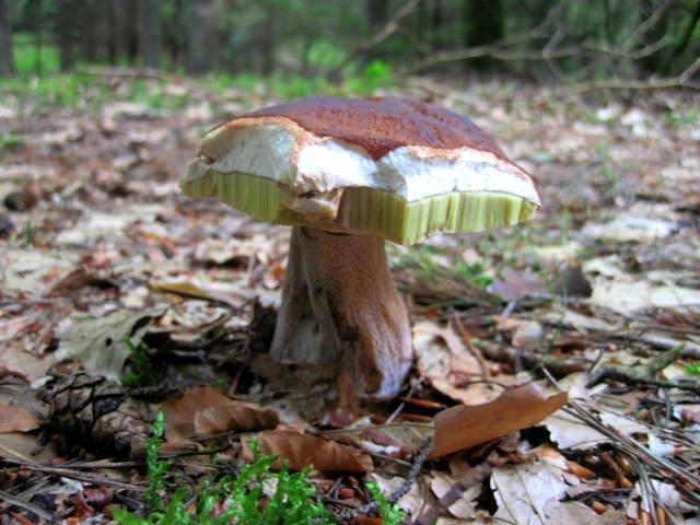 Mushroom by jajafilm