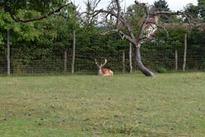 Deer by jajafilm
