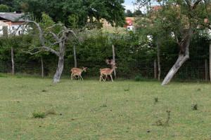 Deer 2 by jajafilm
