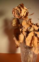 Dried rose by jajafilm