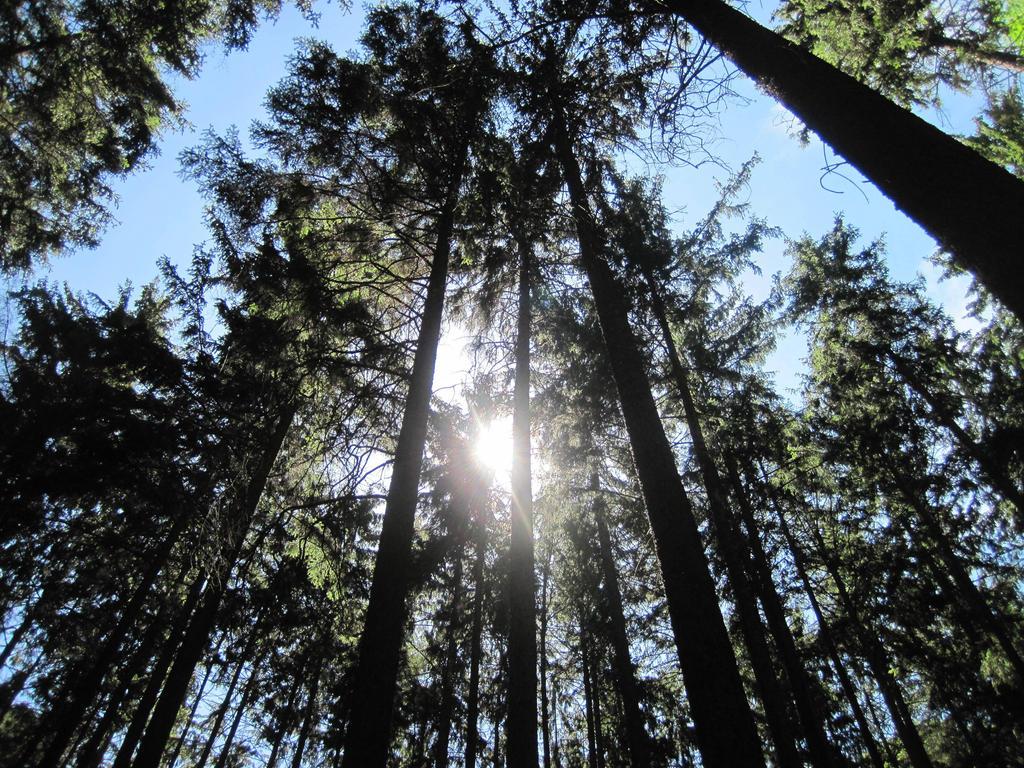 Forest by jajafilm
