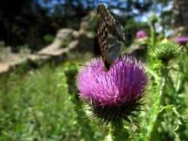 Butterfly by jajafilm