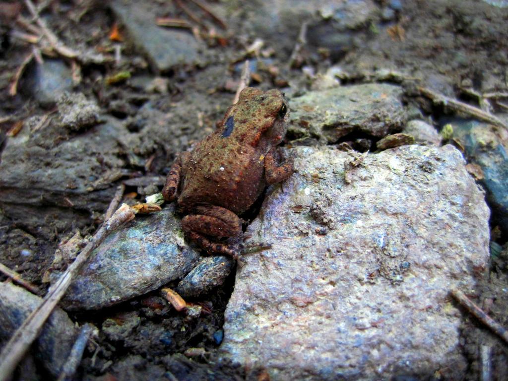 Frog by jajafilm