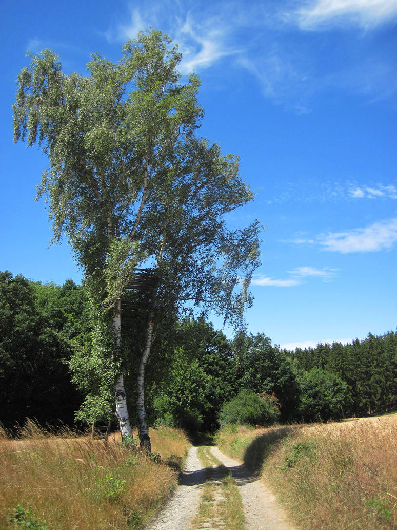 Tree and way by jajafilm