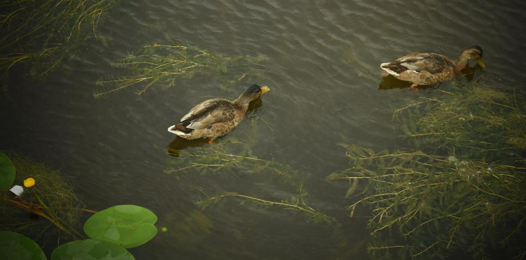 Ducks by jajafilm