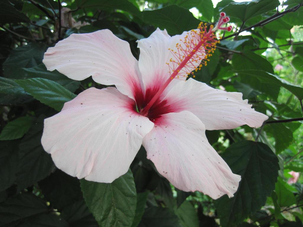 Flower by jajafilm