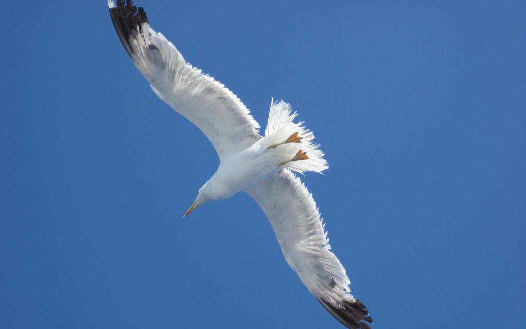 Seagull by jajafilm