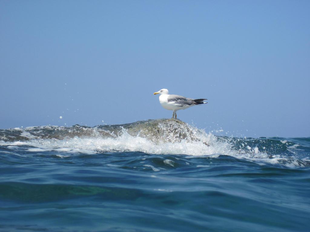 Seagull 2 by jajafilm