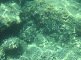 Undersea life by jajafilm