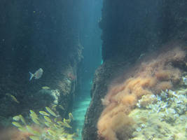 Undersea life 3 by jajafilm