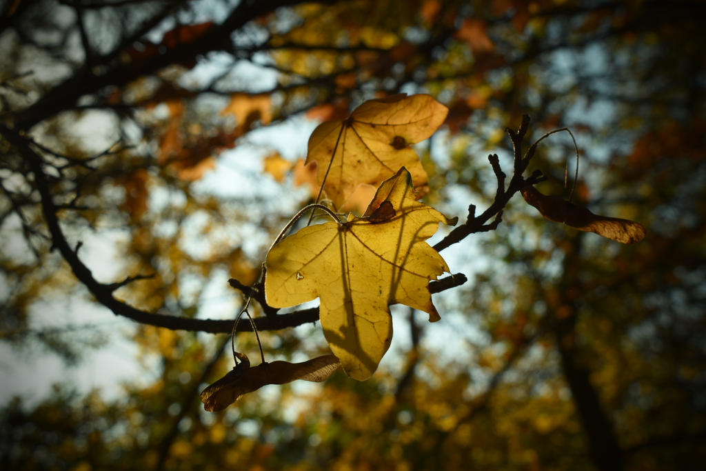 Autumn leaves on trees by jajafilm