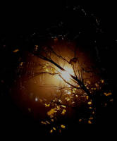At night by jajafilm