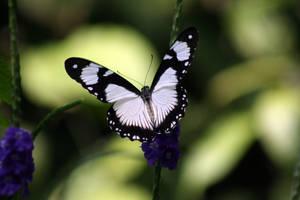 Black and White by erinzinsky