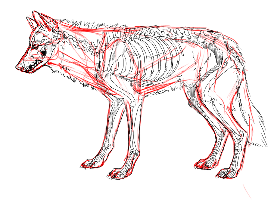 wolf_tutorial_sneak_pe...