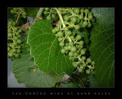 The Coming Wine by redbandana