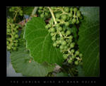 The Coming Wine