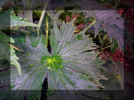 A Delphinium Leaf by redbandana