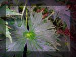 A Delphinium Leaf