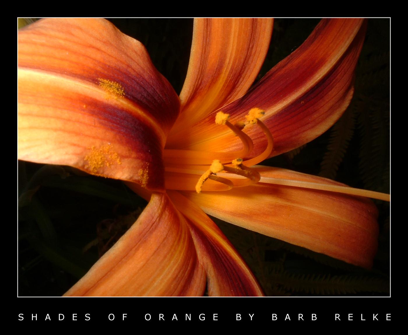 Shades of Orange - A Lily by redbandana