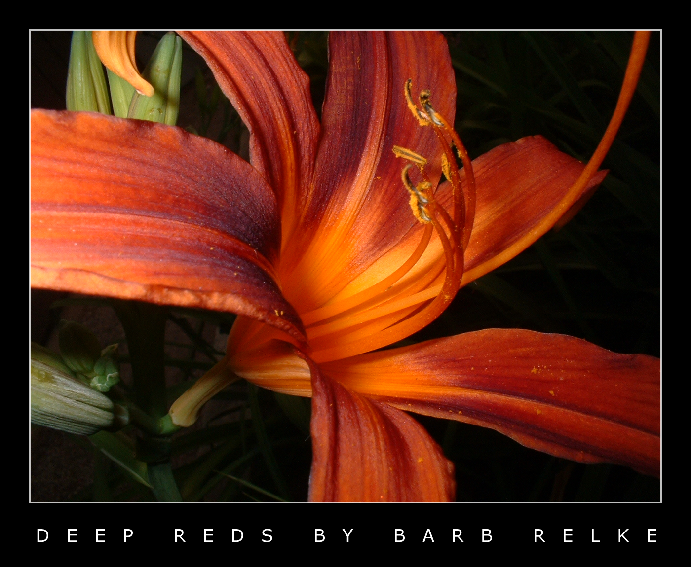 Deep Reds by redbandana