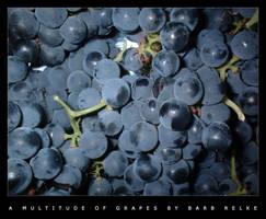A Multitude of Grapes by redbandana