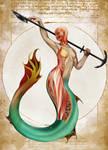 Mermaid Anatomy- Natural History of the Fantastic
