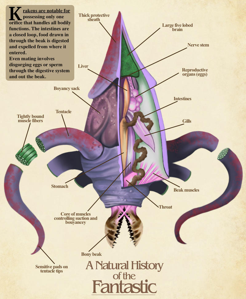 Kraken Anatomy- Natural History of the Fantastic by Christopher ...