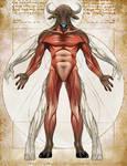 Minotaur Anatomy- Natural History of the Fantastic