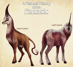 Unicorn Species- Natural History of the Fantastic