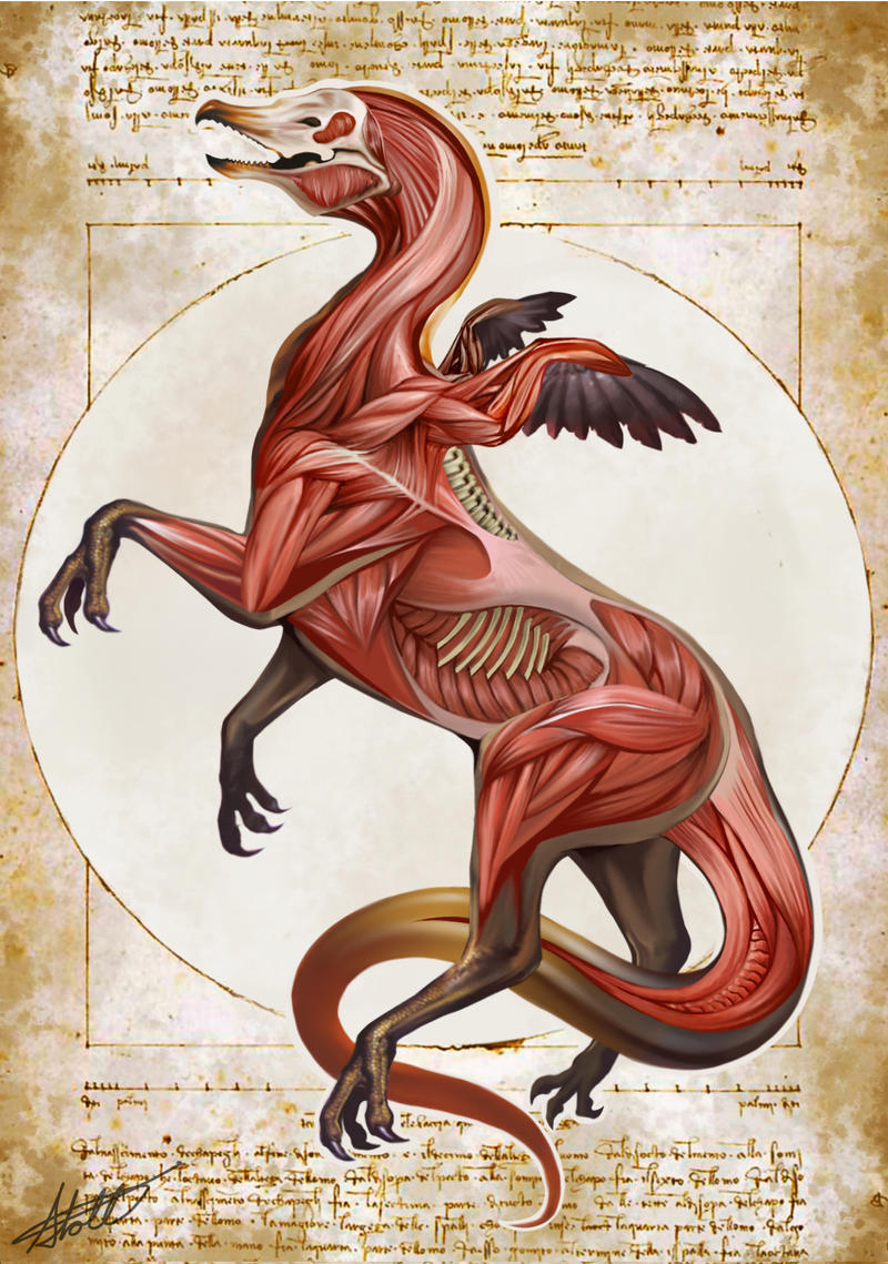 Griffin Anatomy- Natural History of the Fantastic