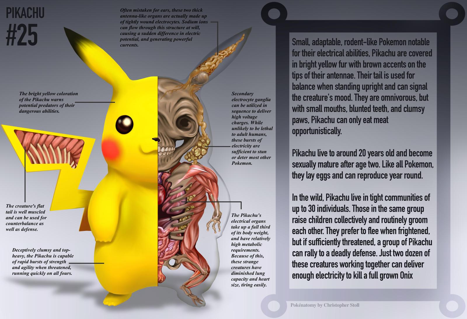 Pikachu Anatomy- Pokedex Entry by Christopher-Stoll
