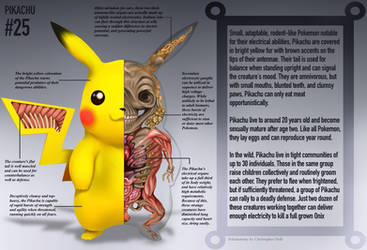 Pikachu Anatomy- Pokedex Entry by Christopher-Stoll