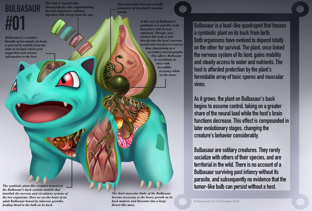 Pokémon Anatomy | NeoGAF