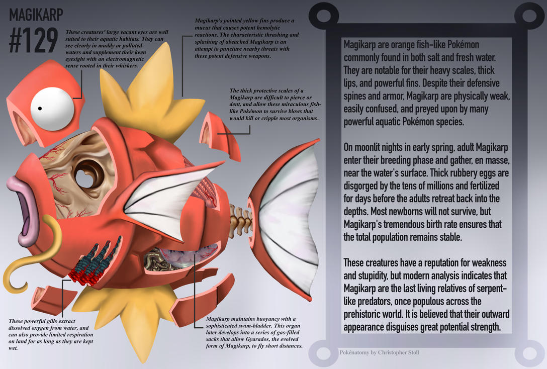 Magikarp Anatomy Pokedex Entry By Christopher Stoll On Deviantart
