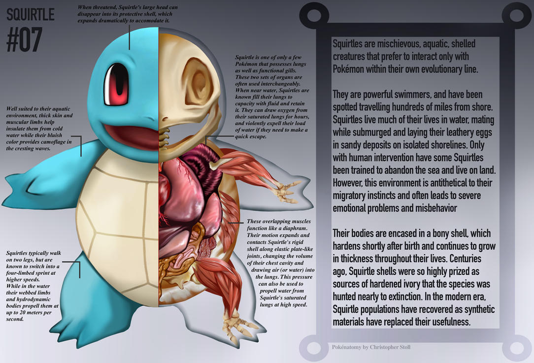 Squirtle Anatomy- Pokedex Entry by Christopher-Stoll on DeviantArt
