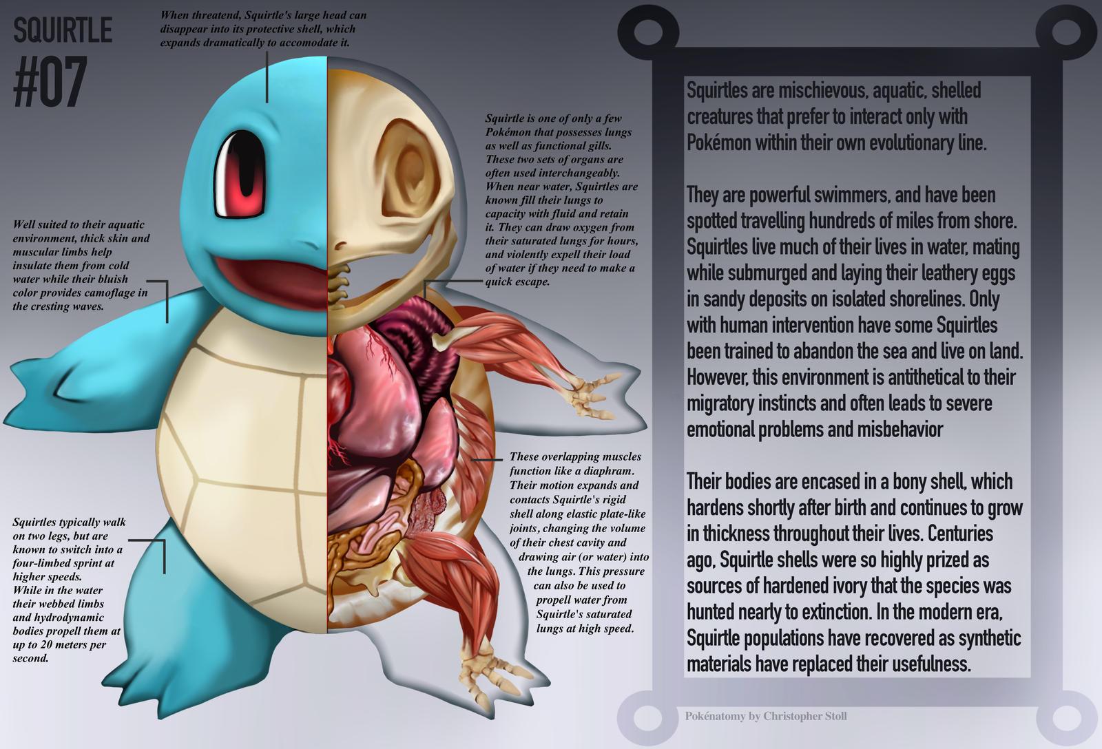 Squirtle Anatomy- Pokedex Entry