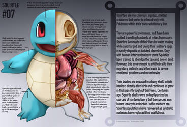 Squirtle Anatomy- Pokedex Entry
