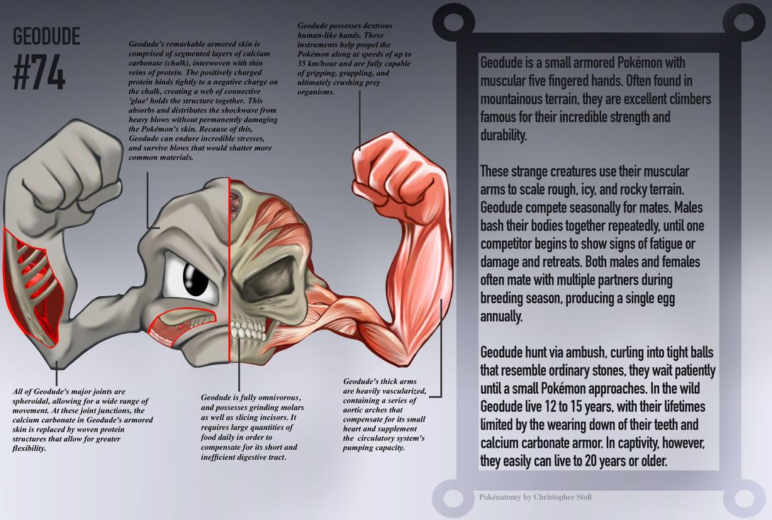 Geodude Anatomy- Pokedex Entry by Christopher-Stoll on DeviantArt