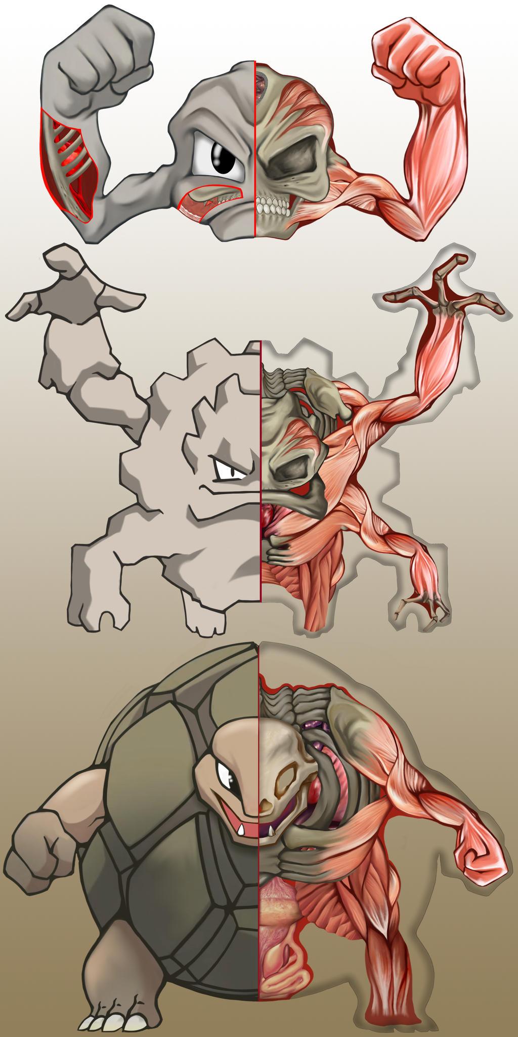 PokeNatomy- Geodude Evolution
