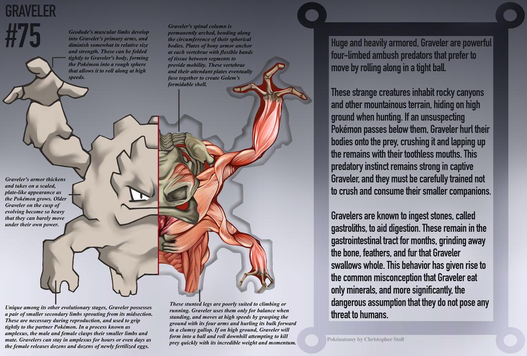 Graveler Anatomy Pokedex Entry By Christopher Stoll On Deviantart