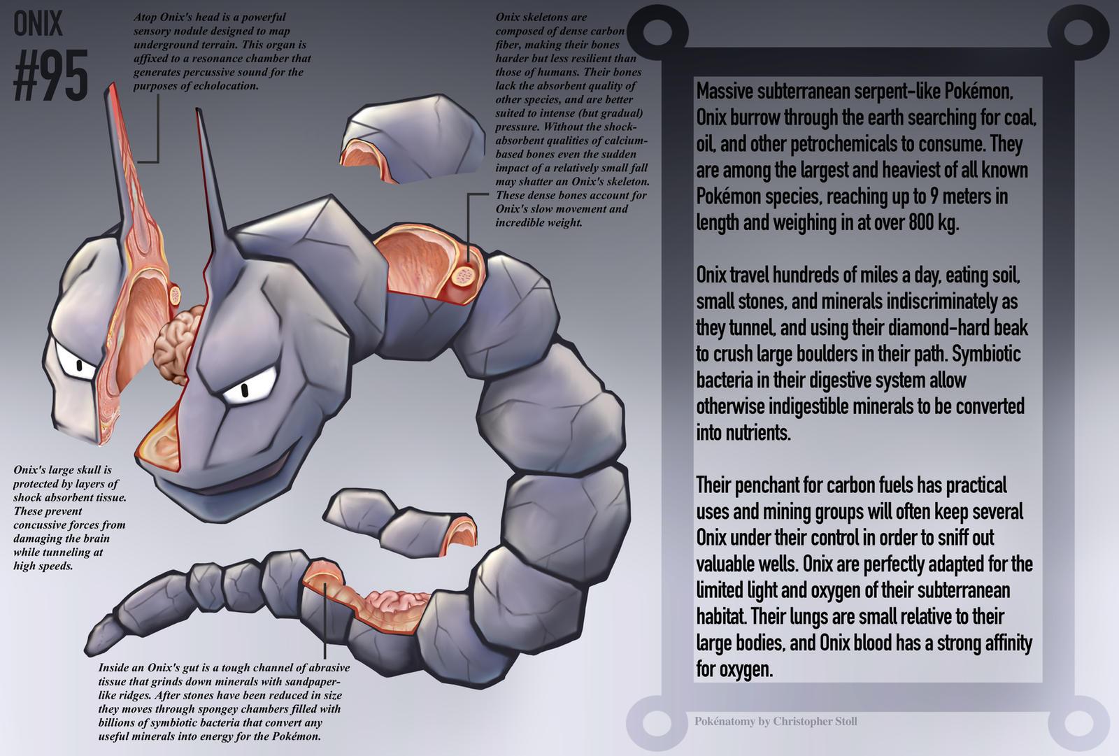 Onix Anatomy- Pokedex Entry