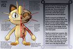 Meowth Anatomy- Pokedex Entry by Christopher-Stoll
