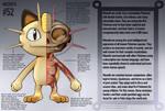 Meowth Anatomy- Pokedex Entry
