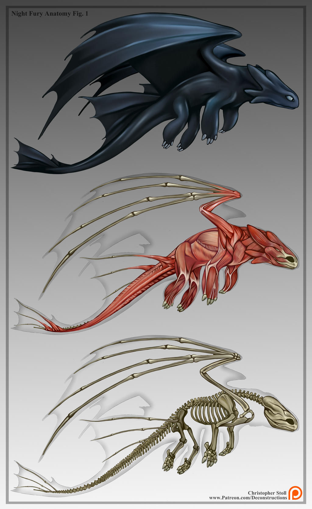 Toothless deconstruction night fury anatomy by christopher stoll on deviantart - Dragon fury nocturne ...