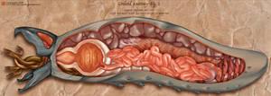 Graboid Anatomy