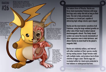 Raichu Anatomy- Pokedex Entry by Christopher-Stoll